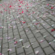 Rose petals on asphalt after wedding ceremony — Stock fotografie #26869047