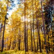 Picturesque autumn forest illuminated by the morning sun. — Stock Photo