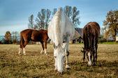 Horses feeding outdoors — 图库照片