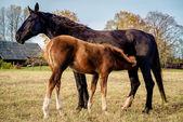 Dos caballos al aire libre — Foto de Stock
