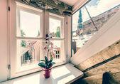 White orchids in pot on sunny window sill — Foto de Stock