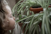 Little Girl Smelling the House Plant — Stock Photo