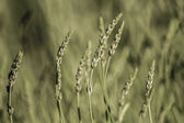 Herbaceous Plants in a Meadow — Stock Photo