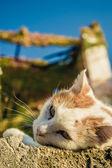 Белый дикая кошка с желтым шаблоны — Стоковое фото