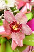 Orchidaceae — Foto Stock