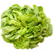 Lettuce Lollo — Stock Photo