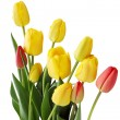 Bouquet of  tulips - Photo