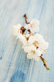 Apricot branch — Stock Photo