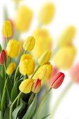 郁金香,副本空间的花束 — 图库照片