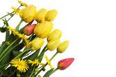 Yellow tulips and daisies — Stock Photo