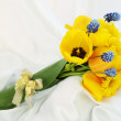 Stock Photo: Tulips and muscari