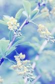 Beautiful bush, tinted — Stock Photo
