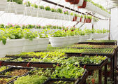 Plantas na estufa — Foto Stock