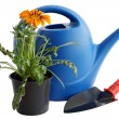 Royalty-Free Stock Photo: Watering can and  flower