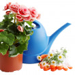 Royalty-Free Stock Photo: Watering can with flowers