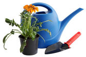 Watering can and flower — Stock Photo