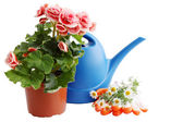 Watering can with flowers — Stock Photo