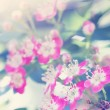 Pink hawthorn — Stock Photo