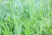 сочная трава — Стоковое фото