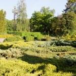 Garden coniferous evergreen — Stock Photo #44573759