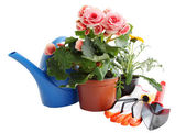 Garden tools and flowers — Stock Photo