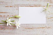 Small white lilies — Foto Stock