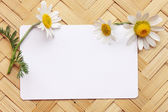 Postcard with daisies — Stock Photo