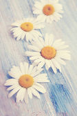 Daisies on an blue board, tinted — Stockfoto