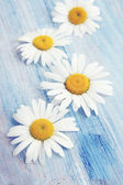 Daisies on an blue board — Stock Photo