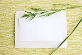 Card with blade of grass — Stock Photo