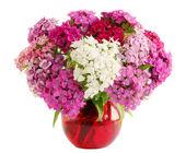 Carnation Allflowers — Stock Photo