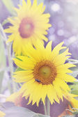 Sunflower,  tinted — Stock Photo