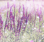 Wild flowers, tinted — Stock Photo