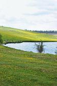 蒲公英草地上 — 图库照片