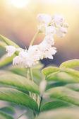 White flower — Foto Stock