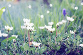 White flowers on the lawn — Stock Photo