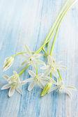 Spring flowers — Foto Stock