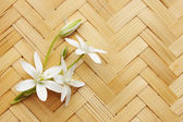 Lily on a wicker board — Photo