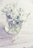 White Lilies, vintage — Stock Photo