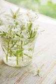 Gigli bianchi in un vaso — Foto Stock