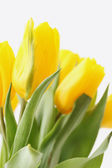 букет из тюльпанов — Стоковое фото