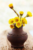 Coltsfoot in the vase — Stock Photo