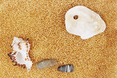 Golden sand rocks and shells — Stock Photo