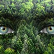 Stock Photo: Green forest and human eyes - Save nature concept