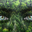 Green forest and human eyes - Save nature concept — Stock Photo