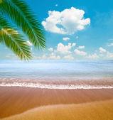 Tropikalne morze i plaża z liści palmowych — Zdjęcie stockowe