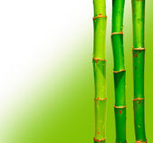 Bamboo sticks against blured background — Foto de Stock