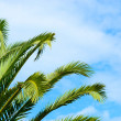 Palm branches against blue sky — Stock Photo