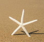 Star shell on sandy beach close-up — Stock Photo