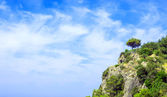 Tree on hill against blue sky — Stock Photo